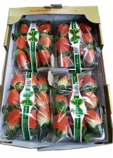 딸기-매향박