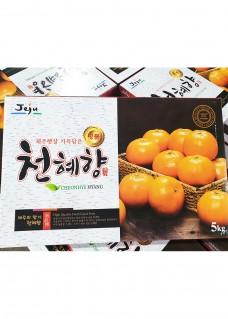 천혜향 5kg box 영